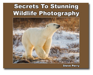 Secrets to stunning wildlife photography download
