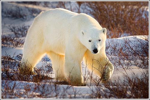 Arctic-Tough-Guy-blog