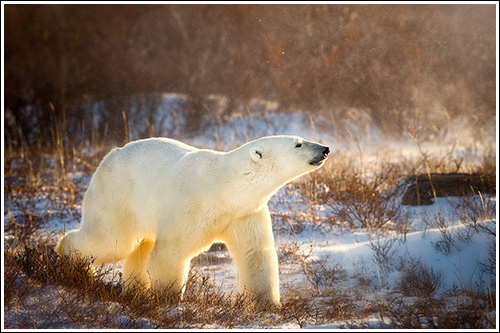 king-of-the-arctic-blog