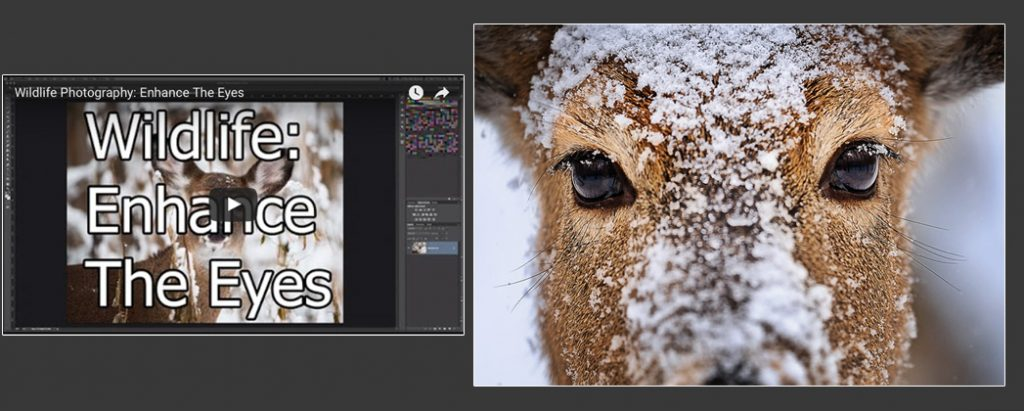 eyes-fi-1024x411.jpg