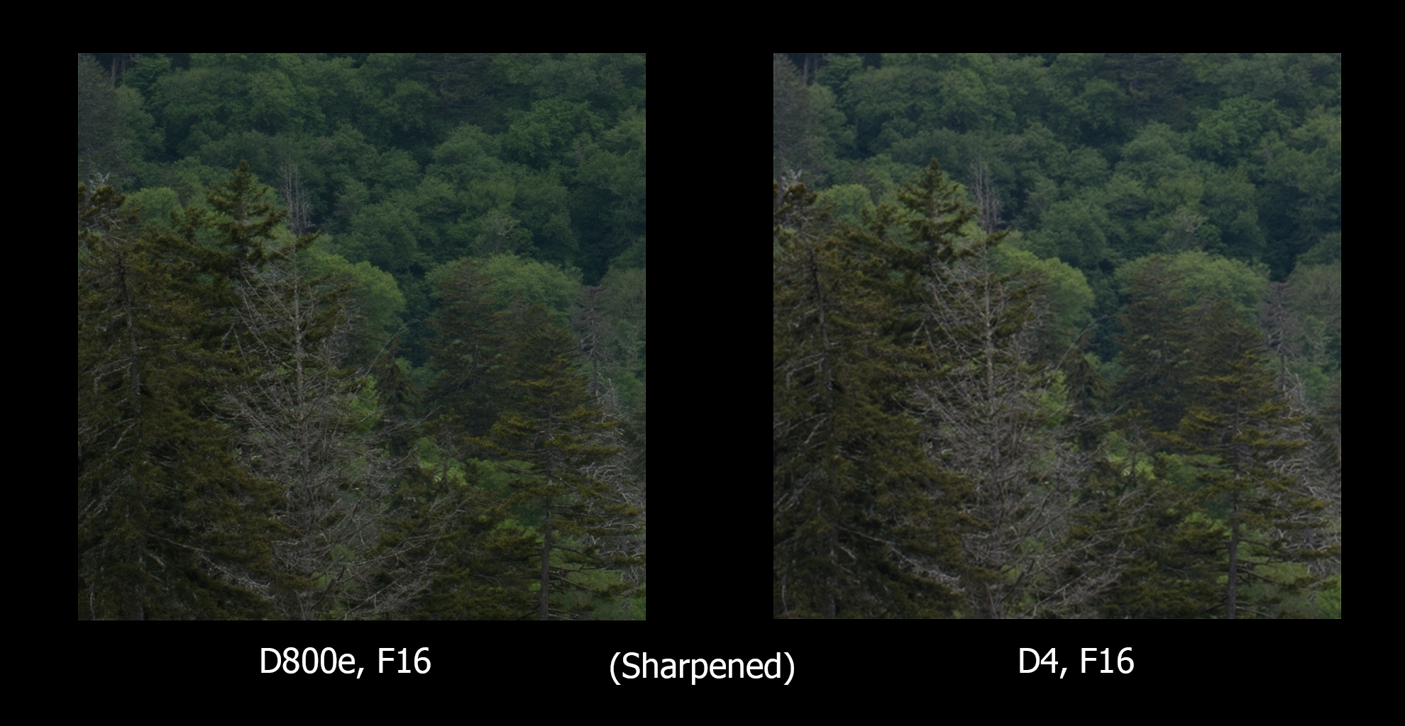 Same as above, only with equal sharpening added for both images