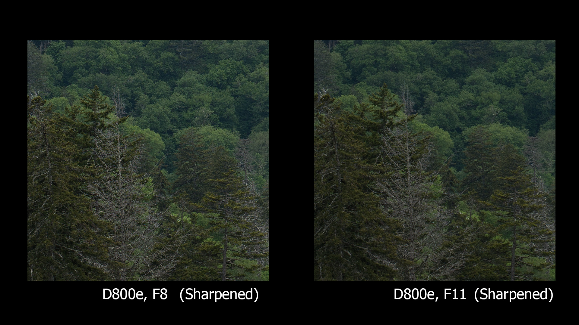 D800e, F8 and F11, BOTH sharpened