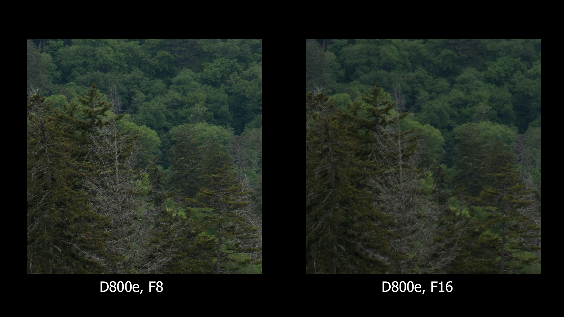 D800e, F8 and F16, no sharpening