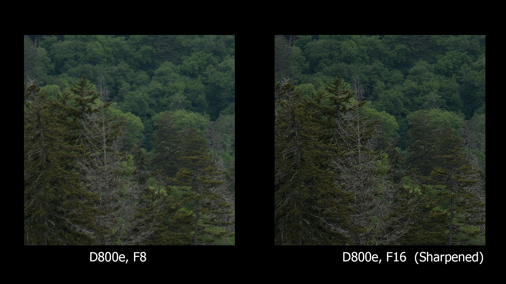 D800e, F8 and F16, ONLY F16 sharpened
