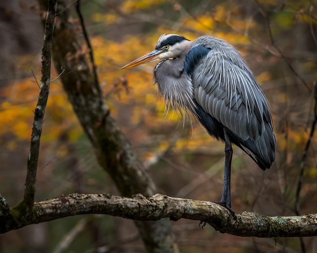 heron-in-tree