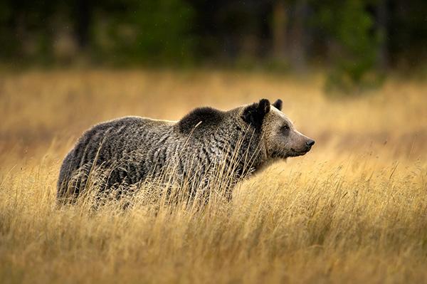 meadow-lookout-600