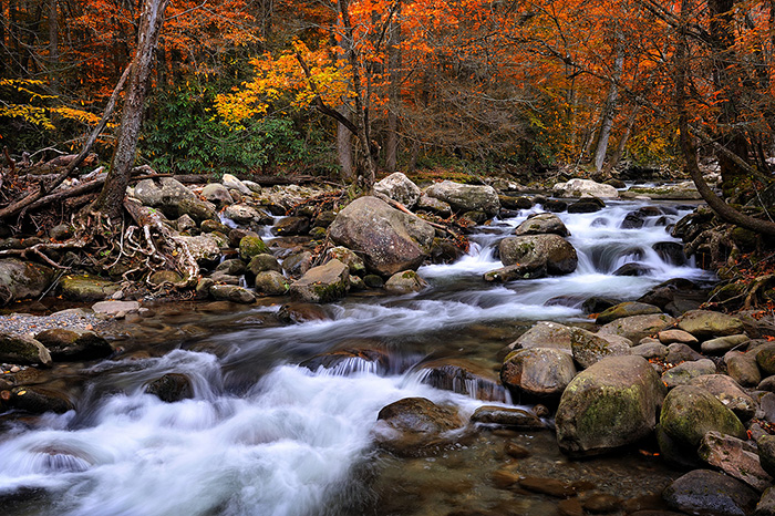 Fall color along a river in Smoky Mountain National Park. The rapids flow along a group or rocks and boulder with red, yellow, and orange trees in the background.