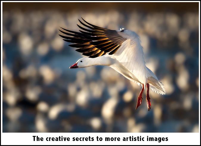 creative-sec
