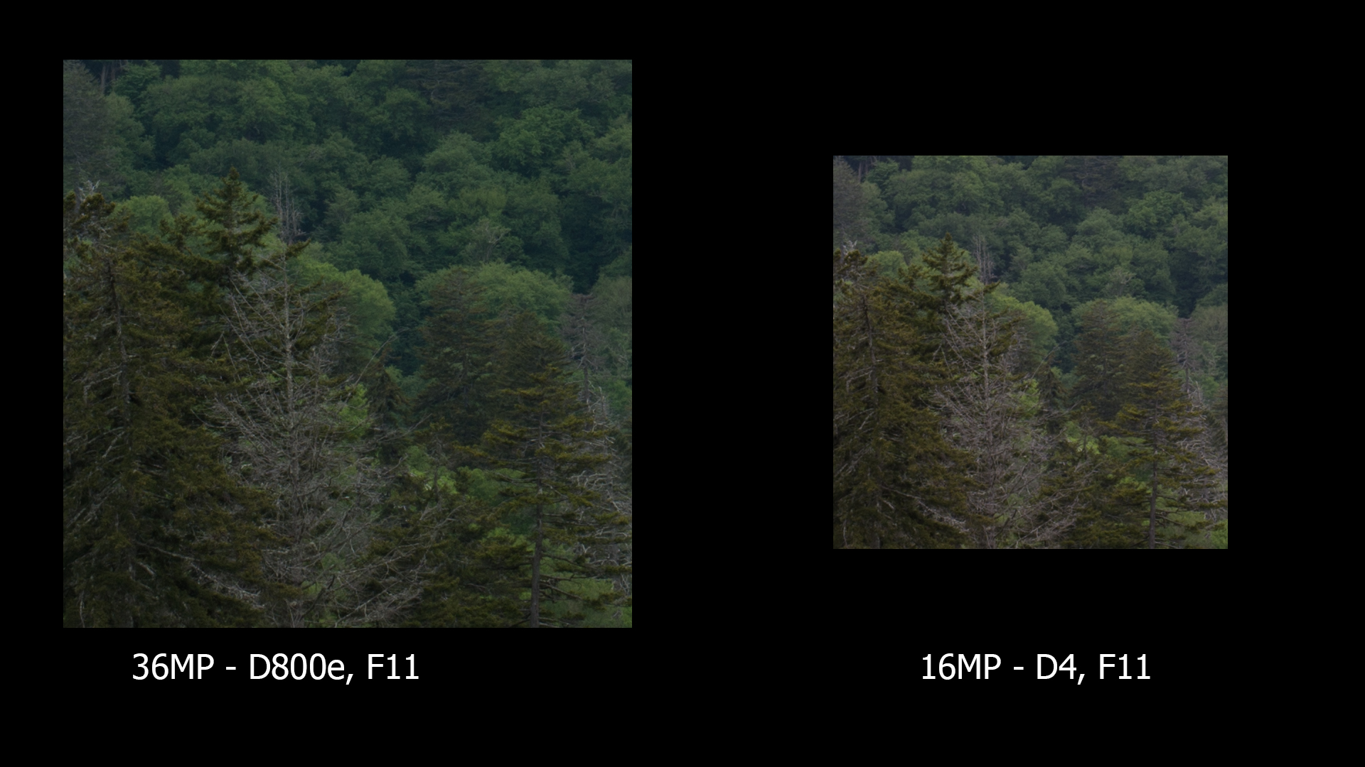 Same area, D800e and D4