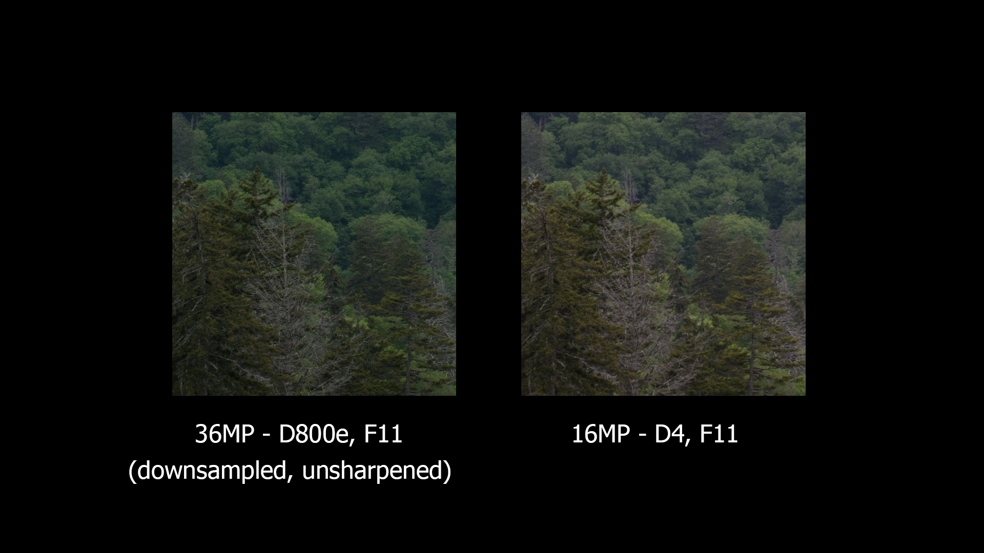 D800e downsized to D4 file size