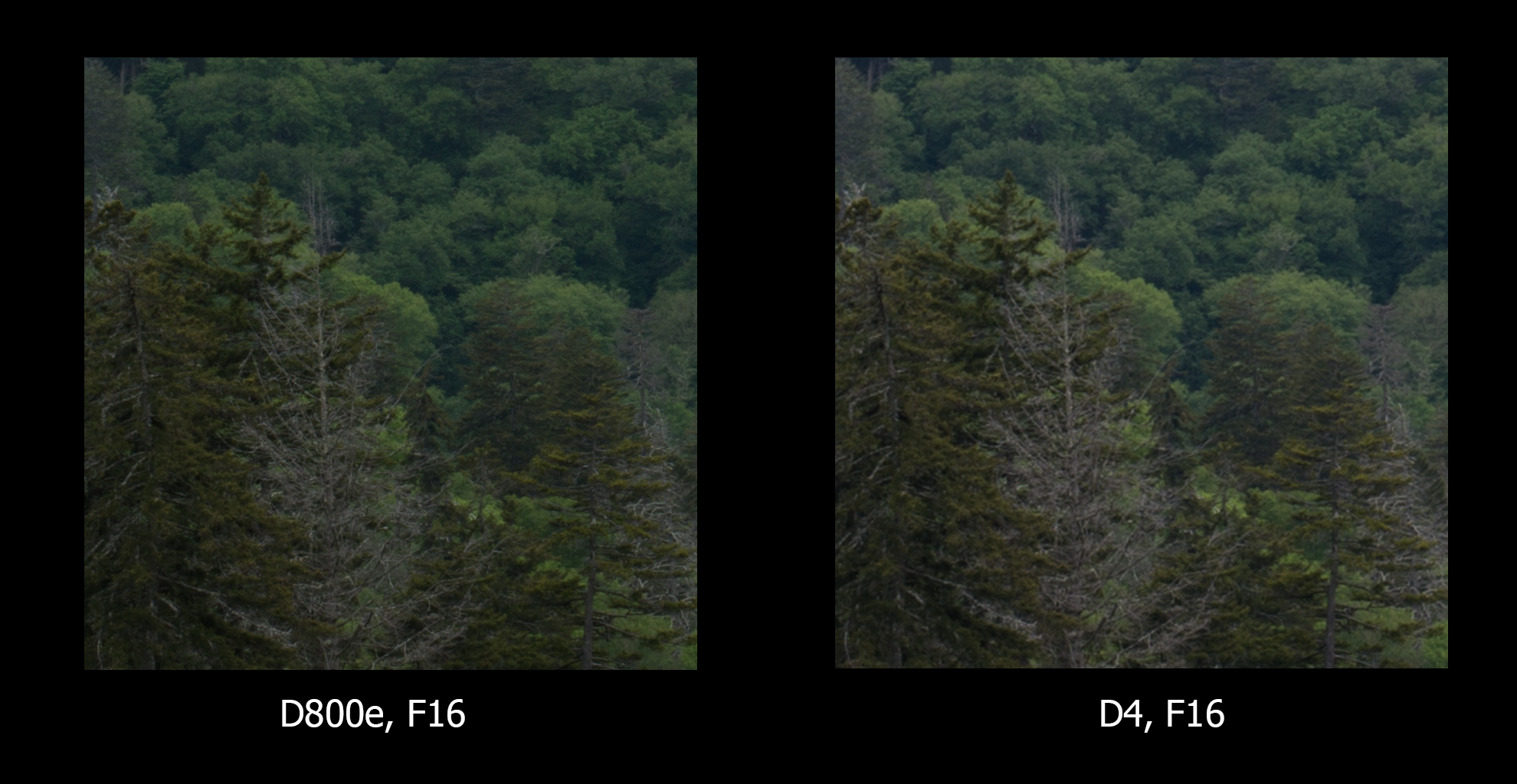 D4 upsized to D800e size, this time, F/16 for both