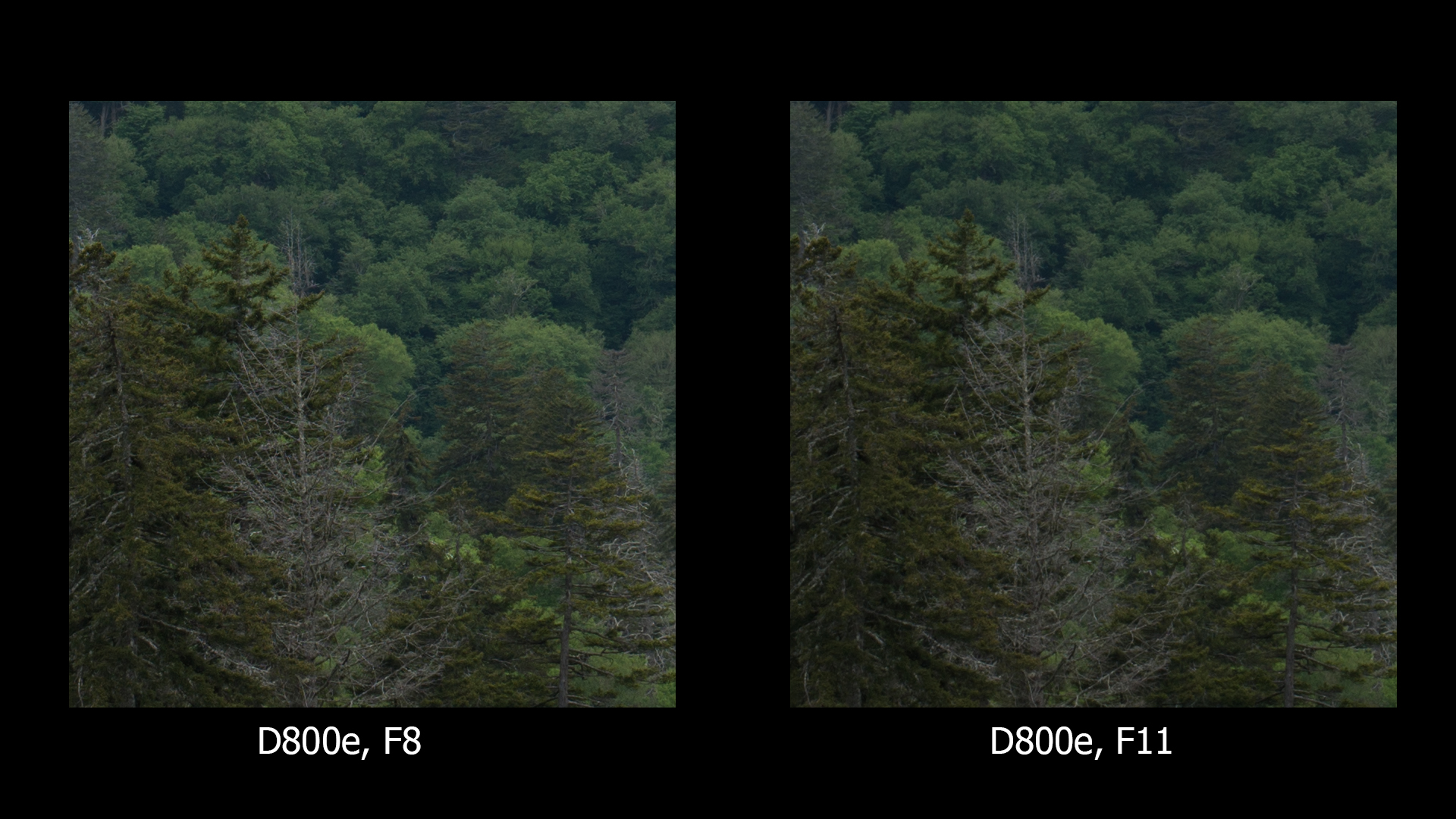 D800e, F8 and F11, unsharpened