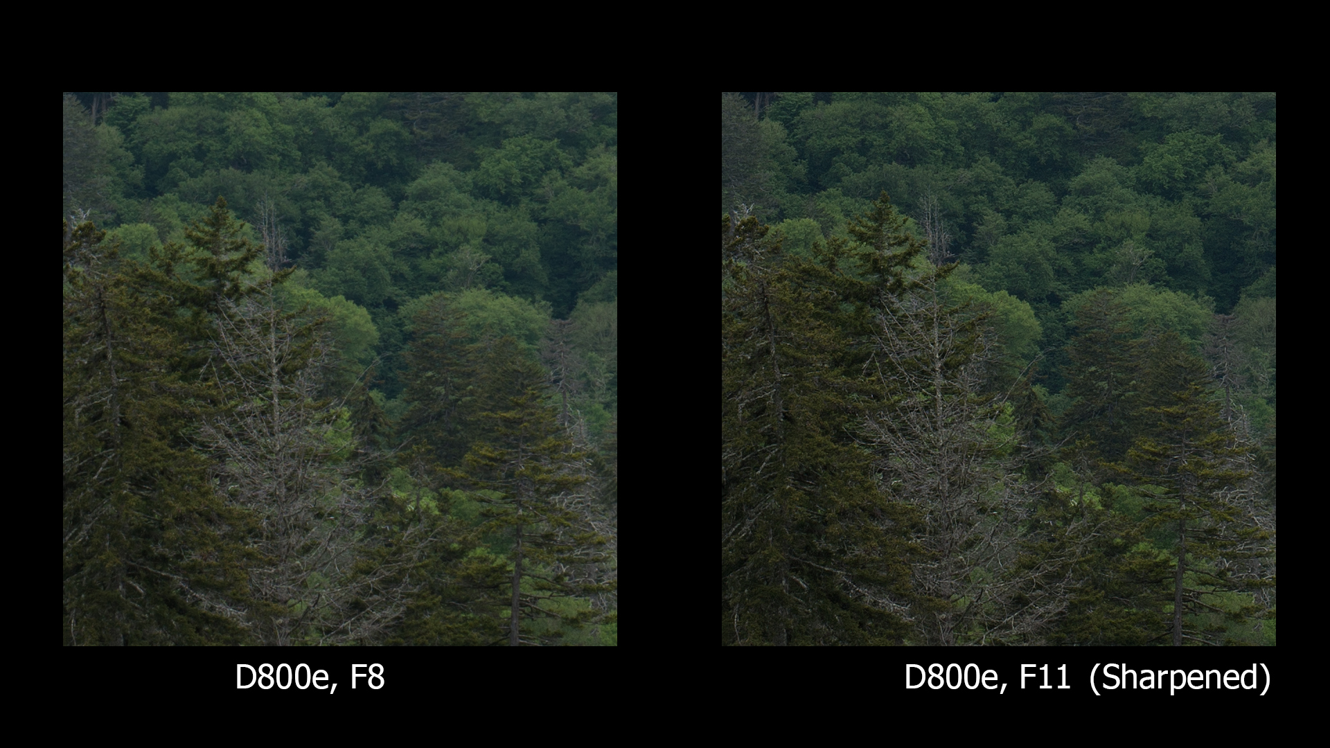 D800e, F8 and F11, ONLY F11 sharpened