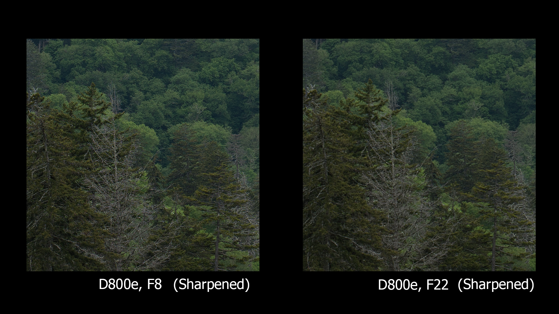 D800e, F8 and F22, BOTH sharpened