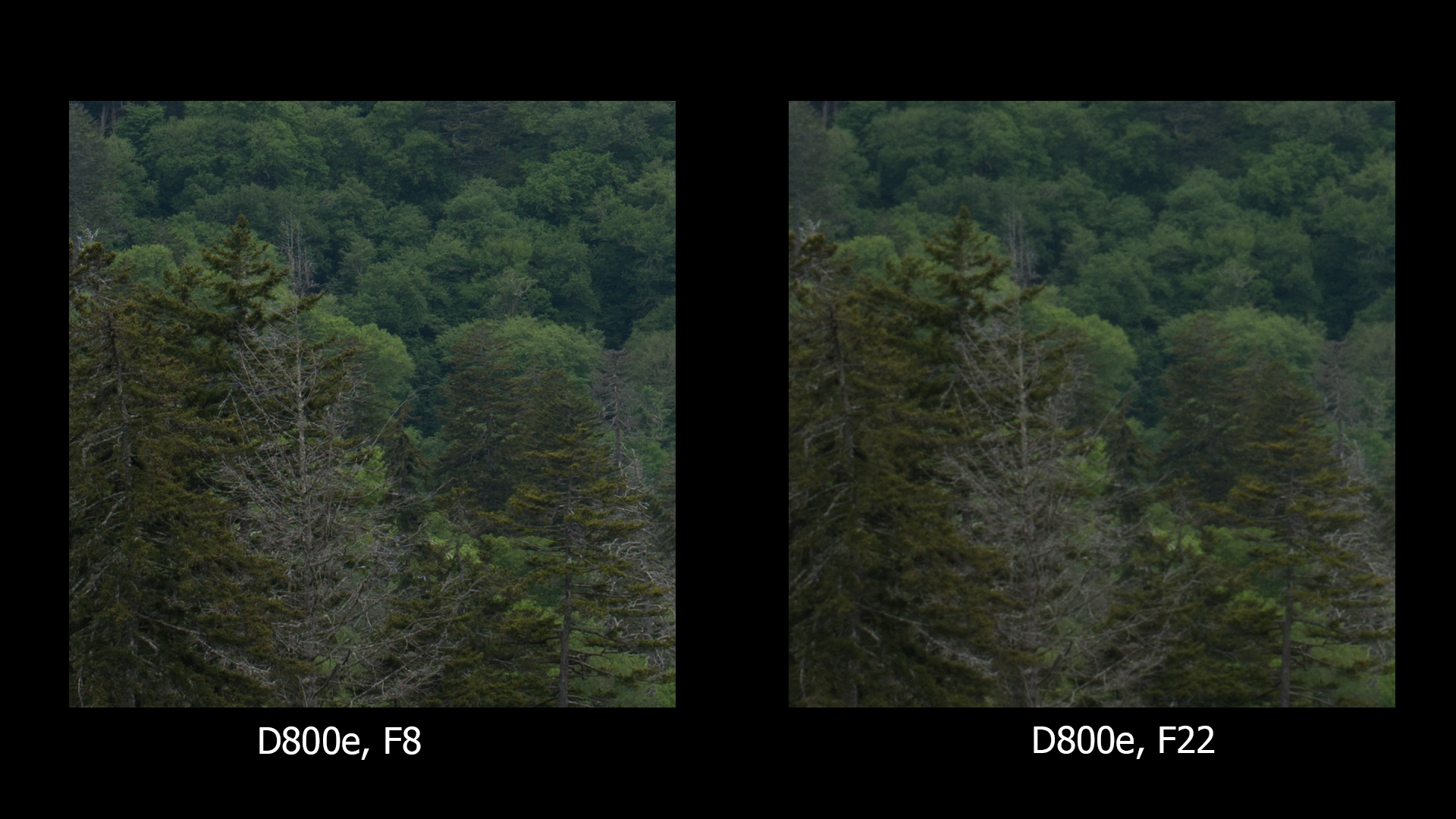D800e, F8 and F22, no sharpening