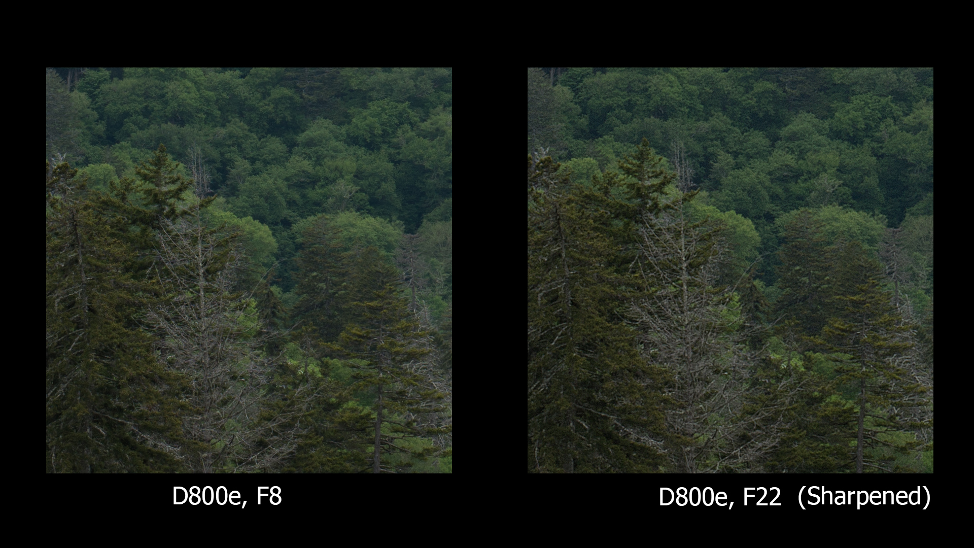 D800e, F8 and F22, ONLY F22 sharpened