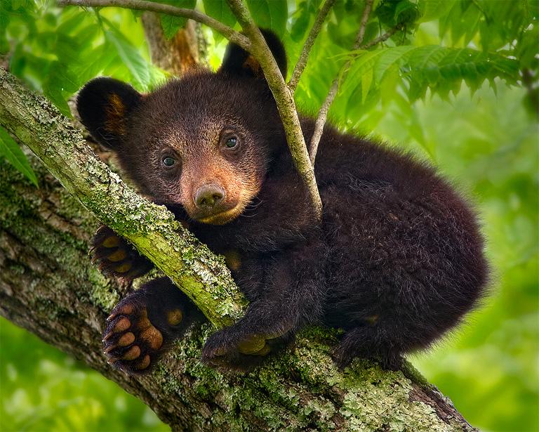 cub-in-a-tree