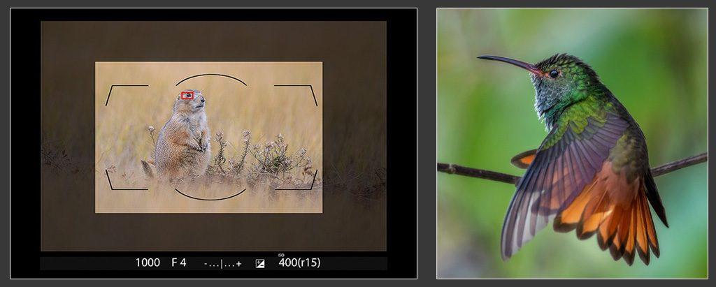 crop-modes-fi-1024x411.jpg