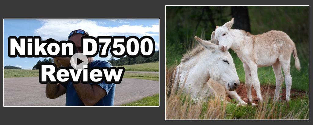 Nikon D7500 Review (with D500 and D7200 Comparison)