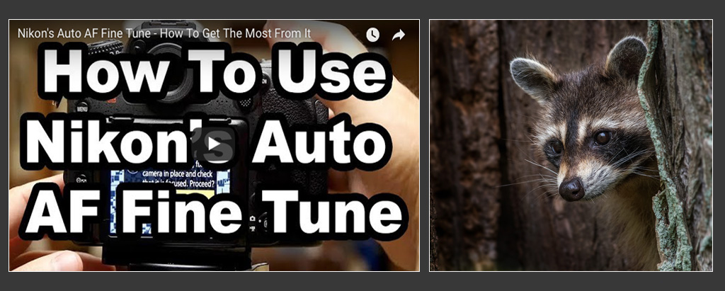 Get The Most From Nikon's Auto AF Fine Tune System