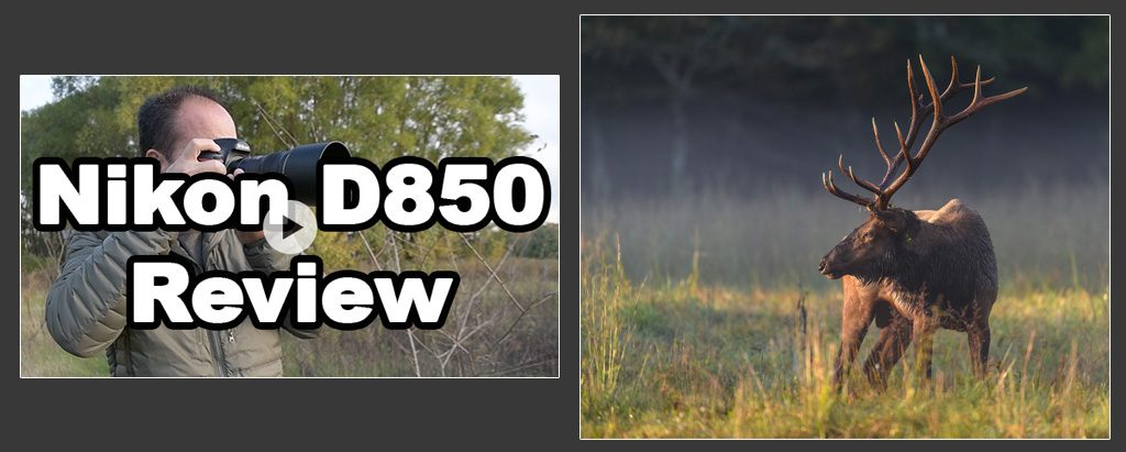 fi-d850-1024x411.jpg