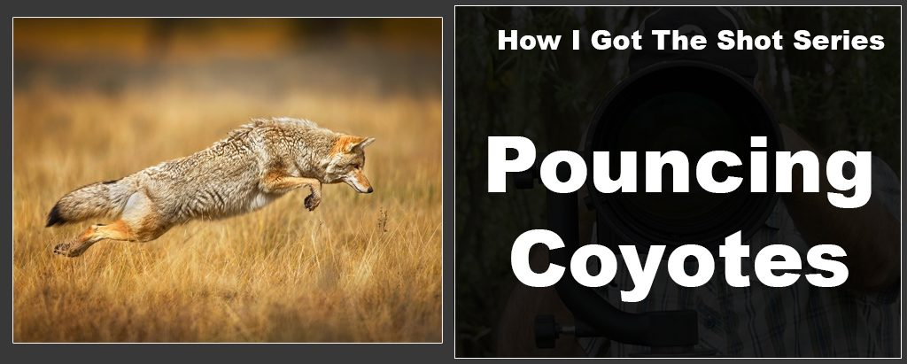 higts-coyotes-fi-1024x411.jpg