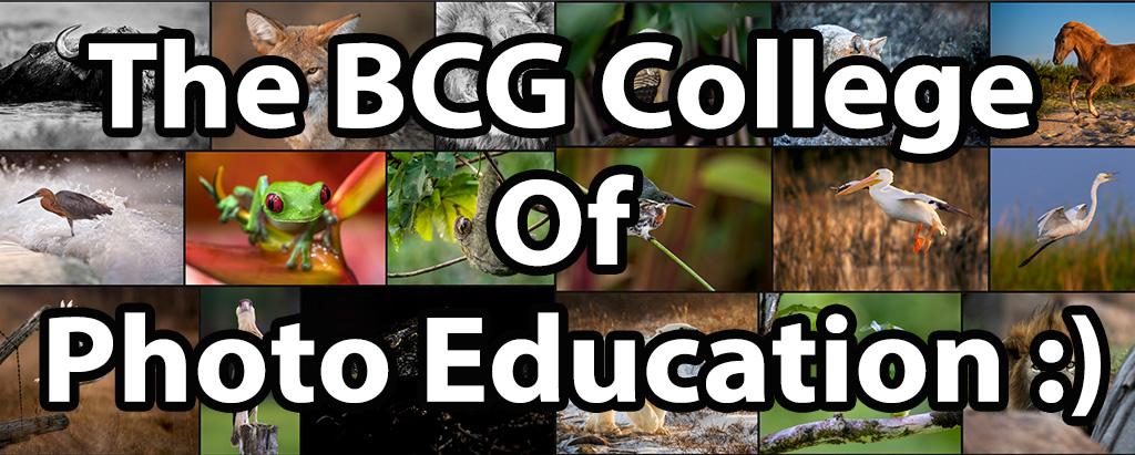 bcg-college-FI.jpg