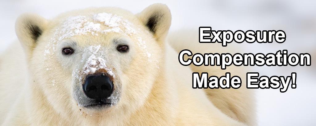exp-comp-fi.jpg